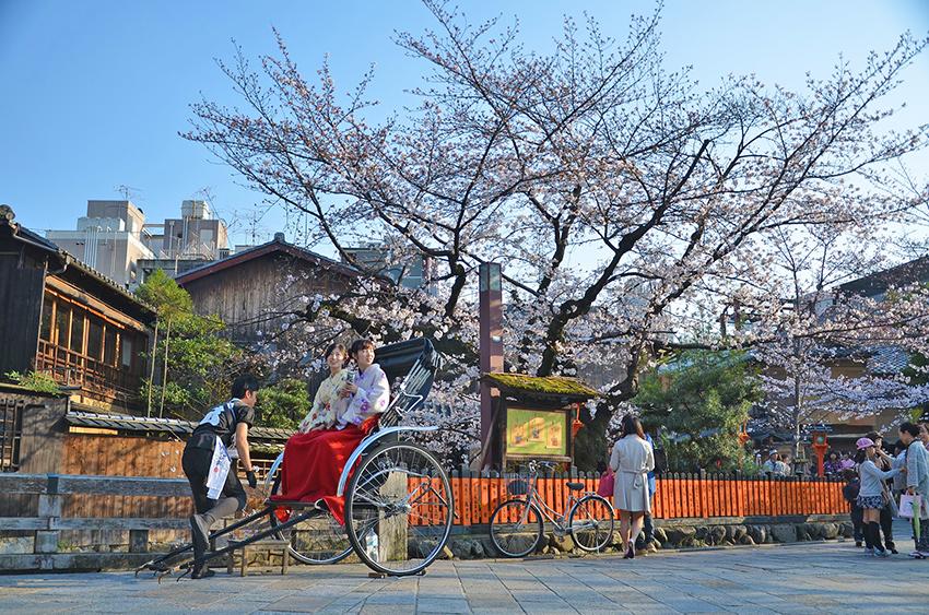 Giovani donne giapponesi in kimono tradizionale che ammirano i fiori di ciliegio da un risciò